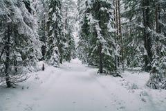 Estrada da neve na floresta no inverno em Rússia Imagens de Stock