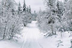 Estrada da neve na floresta no inverno em Rússia Imagem de Stock Royalty Free