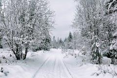 Estrada da neve na floresta no inverno em Rússia Fotos de Stock Royalty Free