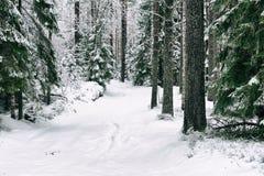 Estrada da neve na floresta no inverno em Rússia Imagens de Stock Royalty Free