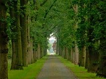 Estrada da pedra com as pistas enevoadas das árvores em uma floresta verde da mola em Kalmthout imagens de stock