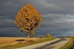 Estrada da queda Fotografia de Stock Royalty Free