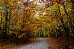 A estrada da queda na floresta Pictured balança o nacional Lakeshore Munisin Fotos de Stock