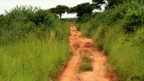 Estrada da selva Imagem de Stock