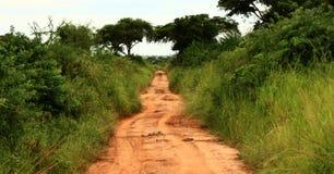 Estrada da selva com efeito do vintage Fotos de Stock