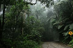 Estrada da selva tropical com sinal Imagem de Stock