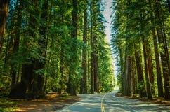 Estrada da sequoia vermelha, Califórnia fotografia de stock royalty free