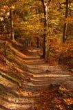 Estrada das madeiras Fotografia de Stock Royalty Free