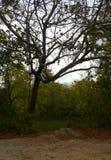 A estrada das quedas no joplin missouri Fotografia de Stock