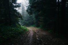 Estrada de Atmosperic através da floresta Imagem de Stock Royalty Free
