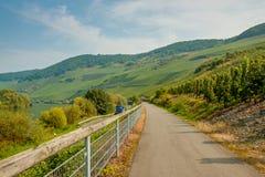 Estrada de ciclismo perto dos vinhedos Imagem de Stock Royalty Free