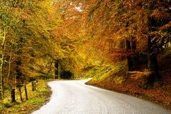 Estrada de Coutry do enrolamento através de uma floresta do outono imagem de stock