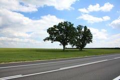 Estrada de dois carvalhos Imagem de Stock Royalty Free
