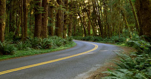 A estrada de duas pistas corta completamente a floresta úmida Fotos de Stock