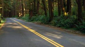 A estrada de duas pistas corta completamente a floresta úmida Imagens de Stock