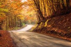 Estrada de enrolamento estreita na floresta brilhante do outono Imagens de Stock Royalty Free