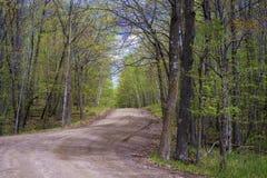 Estrada de enrolamento, floresta do bordo, mola imagem de stock