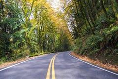 Estrada de enrolamento na floresta amarelando do outono quieto Imagem de Stock