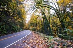 Estrada de enrolamento na floresta do outono com as árvores com folhas amarelas Fotos de Stock