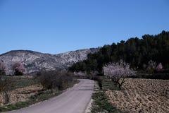 Estrada de enrolamento na paisagem cênico de Alicante, Espanha Imagem de Stock