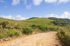 Estrada de exploração agrícola com plantas Fotografia de Stock Royalty Free
