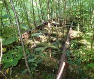 Estrada de ferro abandonada Fotos de Stock