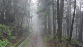 Estrada de ferro abandonada velha na floresta da ?rea c?nico de Alishan com n?voa, emba?amento e n?voa em Taiwan Silhueta do home video estoque