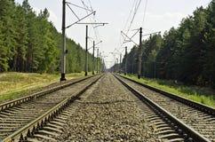 A estrada de ferro através da floresta do pinho Imagens de Stock Royalty Free