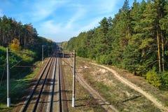 Estrada de ferro na floresta com árvores fotografia de stock royalty free