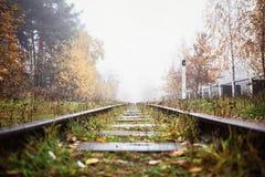 Estrada de ferro na névoa que vai à perspectiva, folhas douradas da floresta imagens de stock royalty free