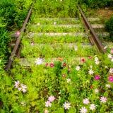 Estrada de ferro vazia oxidada velha com as flores crescentes do cosmos A natureza bate a ind?stria fotos de stock