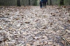 A estrada de floresta é desarrumada com as folhas secas, marrons, últimas dos year's, na mãe do fundo e a criança é andar, guar imagem de stock