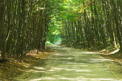 Estrada de floresta. Imagens de Stock