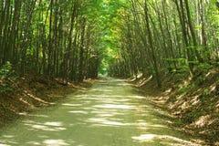 Estrada de floresta. Imagens de Stock Royalty Free