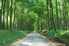 Estrada de floresta. Fotos de Stock Royalty Free