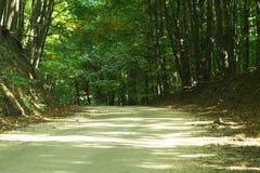 Estrada de floresta. Fotografia de Stock