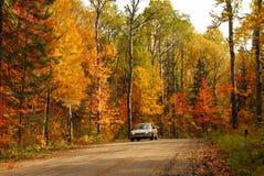 Estrada de floresta Imagens de Stock Royalty Free