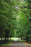 Estrada de floresta Fotografia de Stock Royalty Free