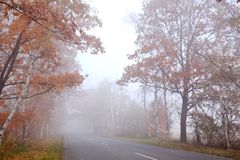 Estrada de floresta Fotografia de Stock