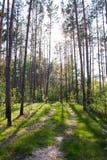Estrada de floresta Fotos de Stock