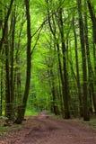 Estrada de floresta Imagens de Stock