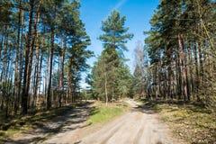 A estrada de floresta Fotos de Stock