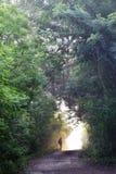Estrada de floresta bonita fotografia de stock