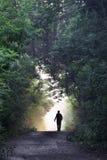 Estrada de floresta bonita fotografia de stock royalty free