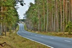 Estrada de floresta cénico Foto de Stock Royalty Free