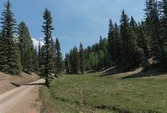 Estrada de floresta de Carson National em New mexico fotografia de stock royalty free