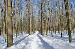 Estrada de floresta coberta com a neve na floresta do inverno Imagem de Stock Royalty Free