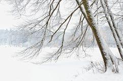 Estrada de floresta coberta com a neve na floresta do inverno Fotografia de Stock