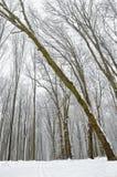 Estrada de floresta coberta com a neve na floresta do inverno Imagem de Stock