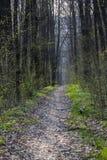 Estrada de floresta da mola nas madeiras Imagem de Stock